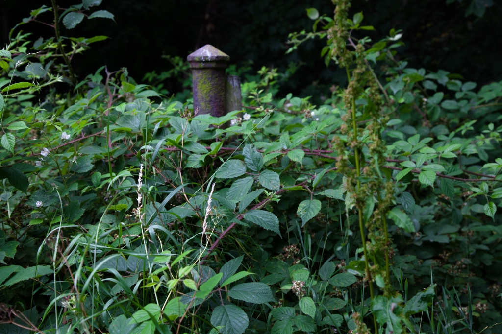 An overgrown trail marker from the 1800's.